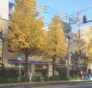 街路樹 3